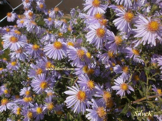 10102013 aster